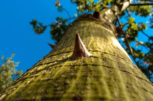 log sting prickly