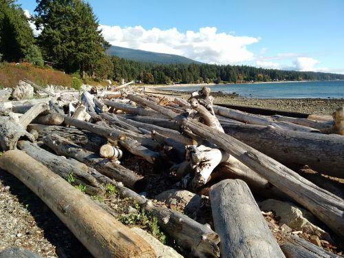 logs beach beachcomber