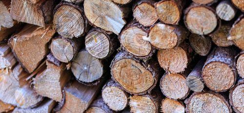 logs tree wood