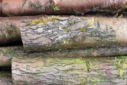 rąstai,samanos,mediena,medis,senas,gamta,tekstūra,žievė,mediena,mediena,natūralus