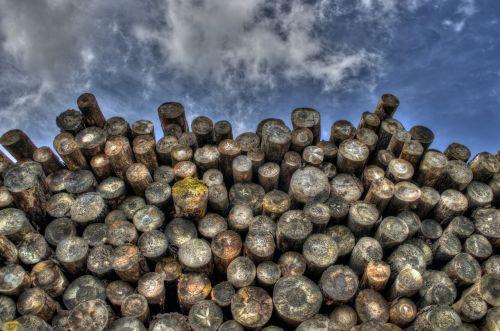 logs wood timber