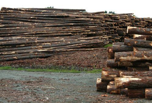 logs sawmill lumberyard