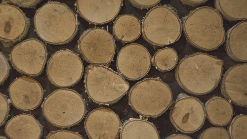 logs tree pen′ok
