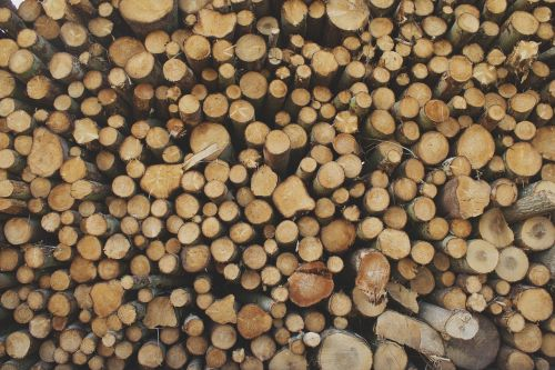 logs lumber wood