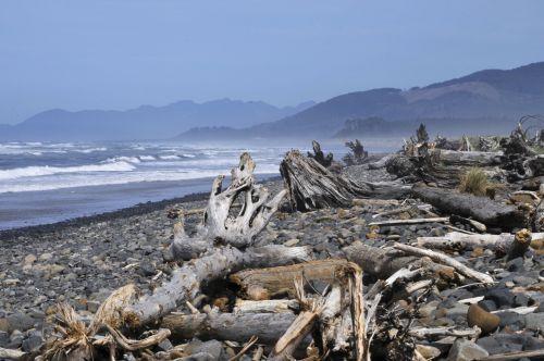 Logs Along The Beach Shore