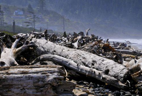 Logs Along The Beach