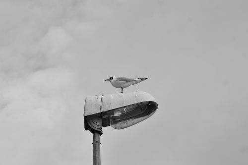 The Bird And The Lamppost