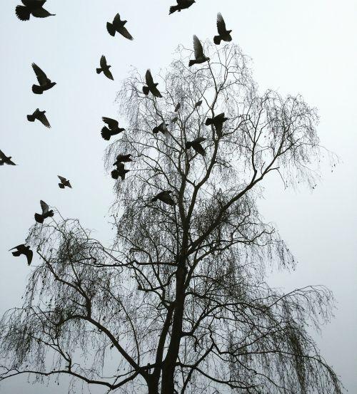 london winter startled pigeons