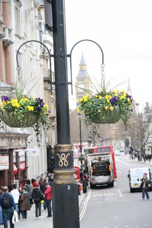 London Hanging Baskets Flowers
