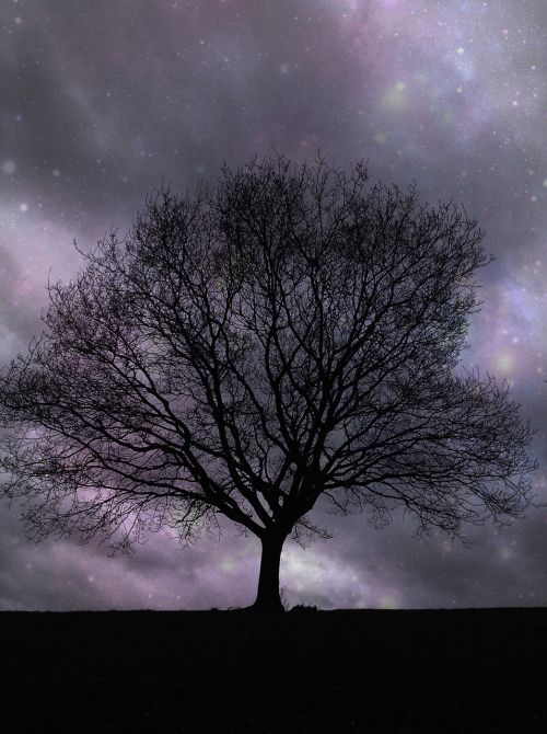 lone tree stars night