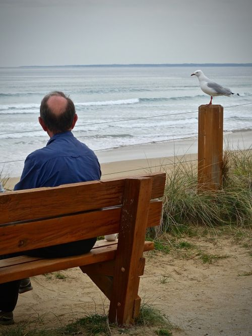 lonely seagull sea