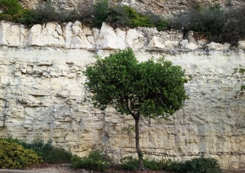 Lonely Tree Against Cliff