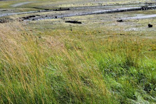žolė, Kanada, parkas, uostas & nbsp, Moody, lauke, natūralus, žalias, žalia žolė, nuotrauka, tekstūra, spalva, gamta, eksterjeras, ilgi & nbsp, žolė, ilga žolė