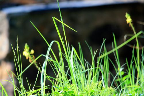 Long Grass And Stalks