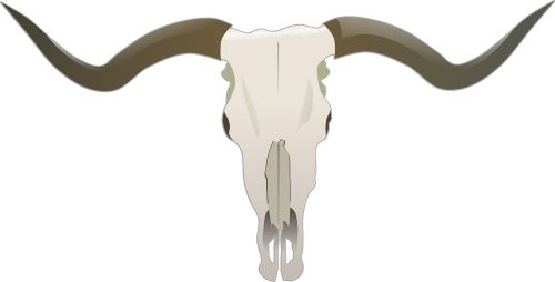 longhorn beef bones