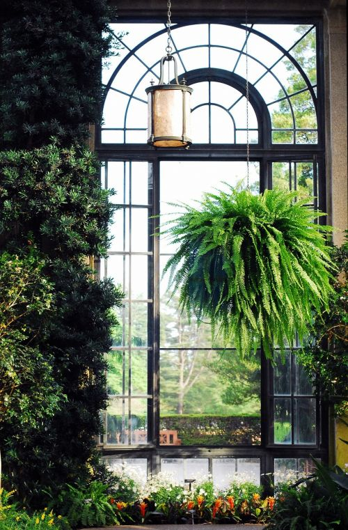 longwood gardens window