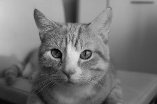 look feline feline look