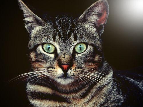 look artistic cat
