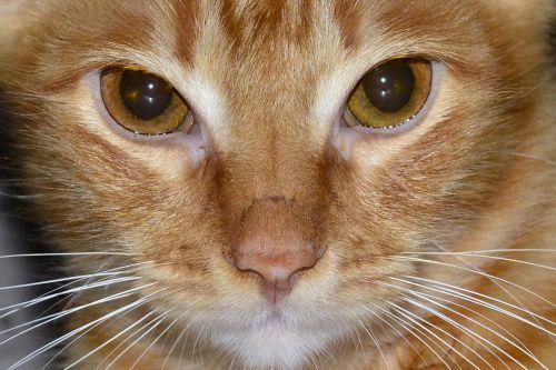 look cat feline look