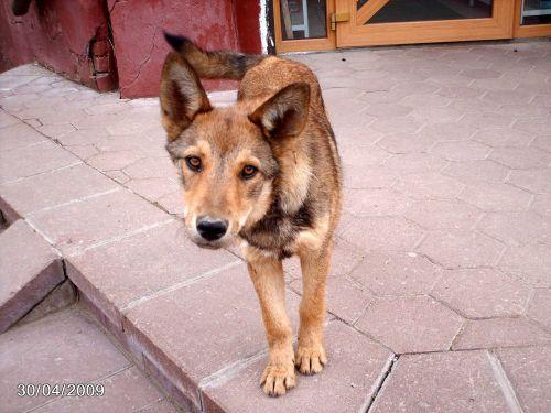 Look Curious Dog