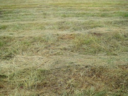 Loose Cut Grass
