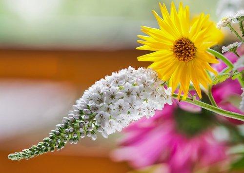 loosestrife  marigold  flower