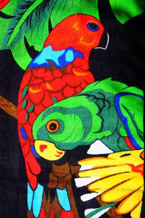 loris birds parrots