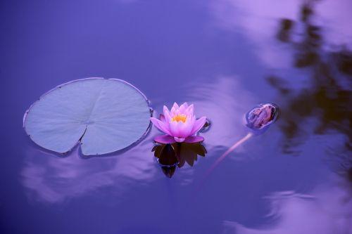 lotus natural water