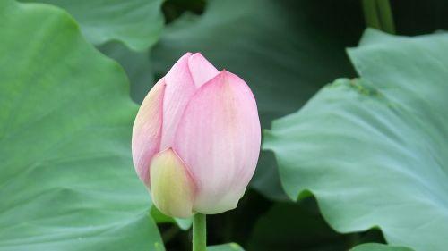 lotus natural views