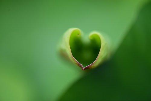 lotus  hart  love