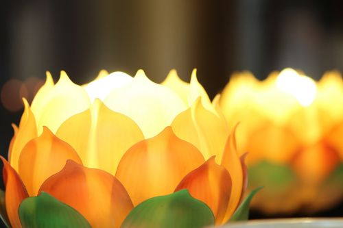 lotus beautiful china wind