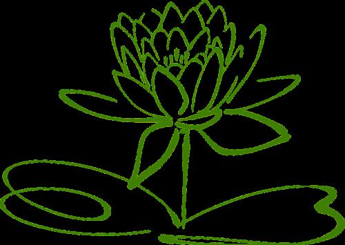 lotus blossom lotus flower
