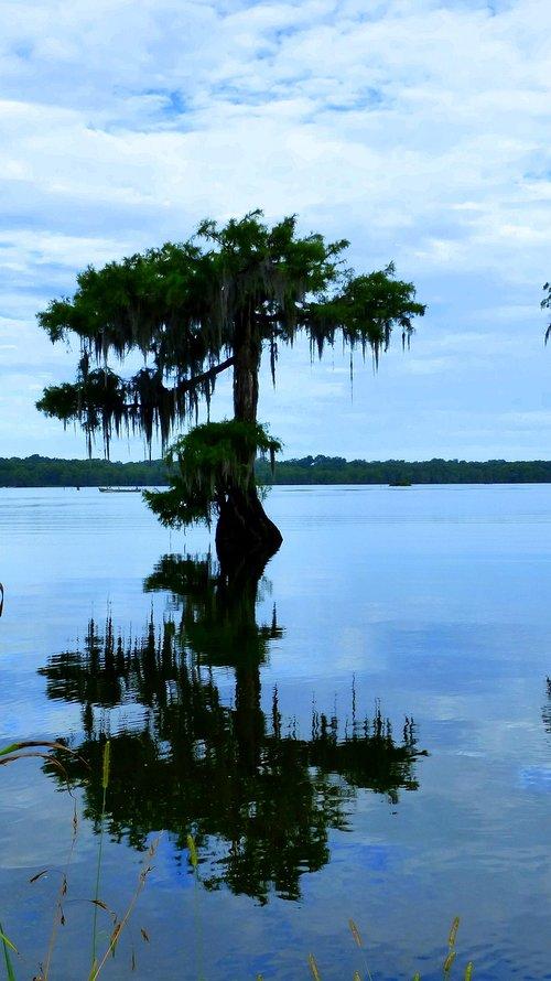 louisiana  bayou  nature