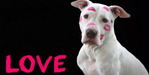 love valentine's day february