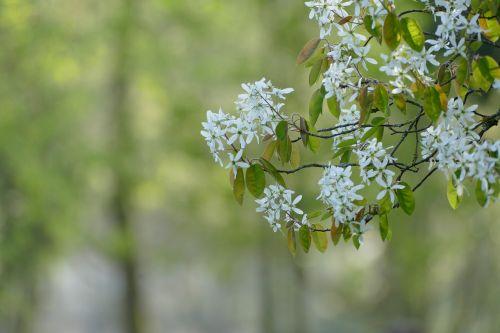 love spring tree