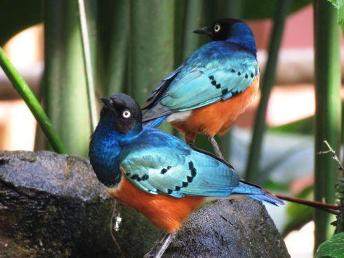 mylėti paukščius,spalvingi paukščiai,kartu