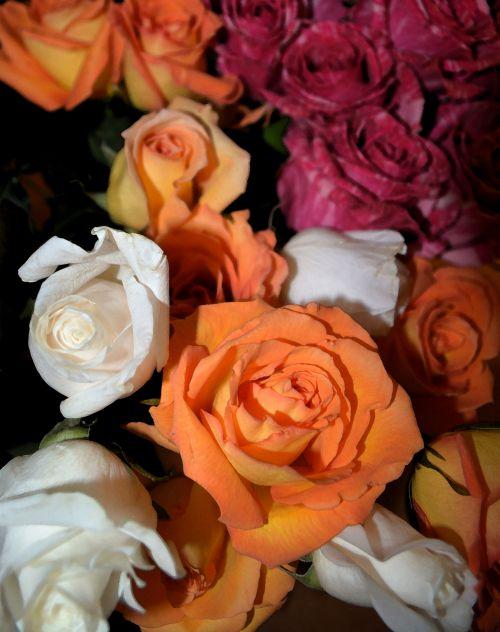 Love Flower Roses Blooming