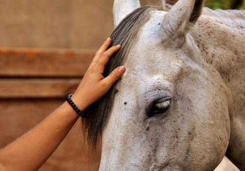 love for animals horse stroke