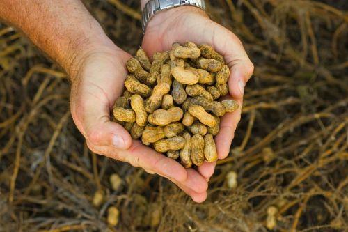 Love Of Peanuts