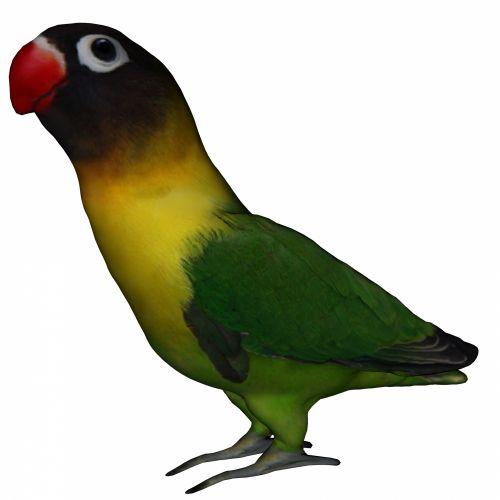 Lovebird II