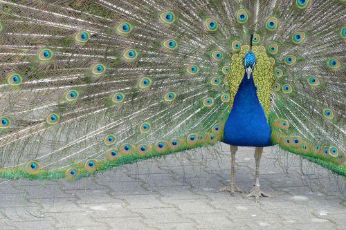 lovely bird love