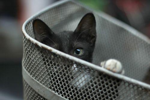 cat sad eyes hide
