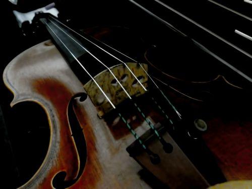Low Light Violin