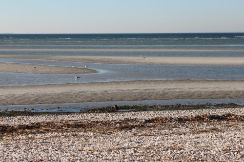 low tide sand ecology