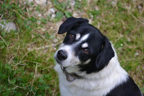 loyalty dog companion