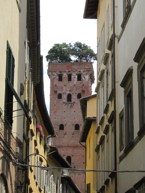 lucca tower overgrown