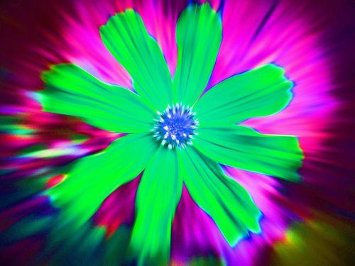 gėlė, kosmosas, žalias, sprogo, poveikis, aiškus, žalia spalvos kosmosas