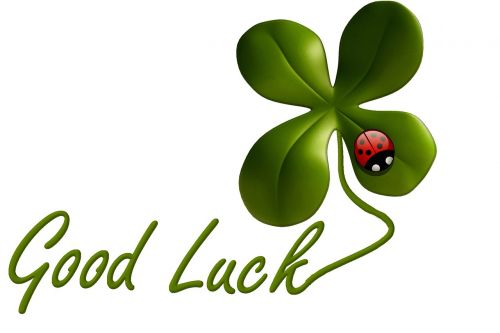 luck lucky clover ladybug