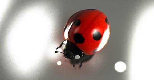 luck lucky ladybug 2017