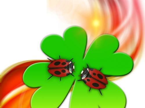 luck lucky ladybug ladybug